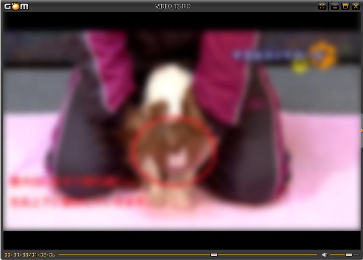 藤井聡さんの犬のしつけDVD マズルコントロール画像