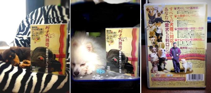 藤井聡さんの犬のしつけDVD 商品画像