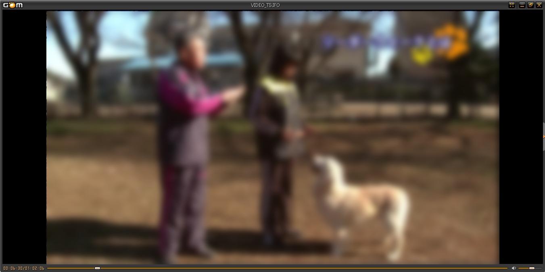 藤井聡さんの犬のしつけDVD リーダーウォーク画像